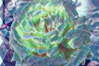 rose lumiére bleu